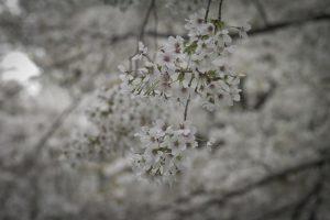 サクラとHDDと春の日と。
